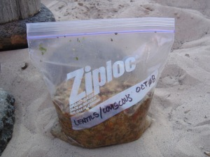 Delicious dinner in a bag.