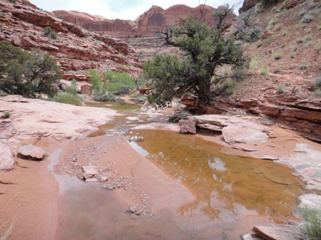 A pool of fresh, clean water about mid-way down Scorpion Gulch. Photo by Gerald Trainor.